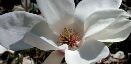 Botanisch_070701_g5.jpe