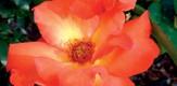 Botanisch_070701_g6.jpe