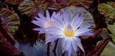 Botanisch_070701_g9.jpe