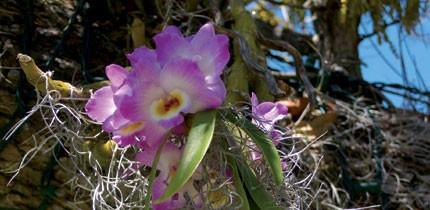 Botanisch_070701_g12.jpe