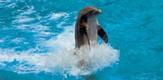 Flipper_070101_g2.jpe