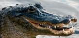 Floridas_FL_080401_g7.jpe