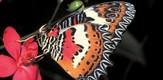 Schmetterling_070401_g1.jpe