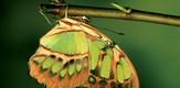Schmetterling_070401_g3.jpe