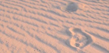 Spuren_im_Sand_g1.jpe