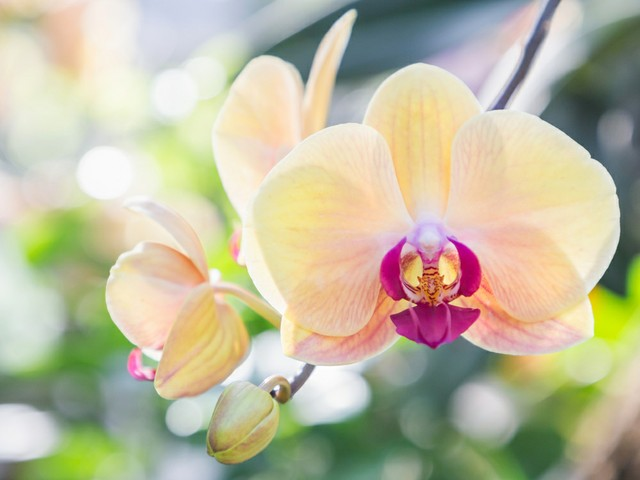Orchid Show Fort Lauderdale