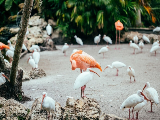 Flamingo Gardens (c) Greater Fort Lauderdale CVB_2020.jpg