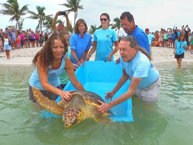 Freilassung von Schildkröte Judy