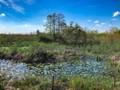 Loxahatchee Slough Natural Area in Palm Beach Gardens, Florida