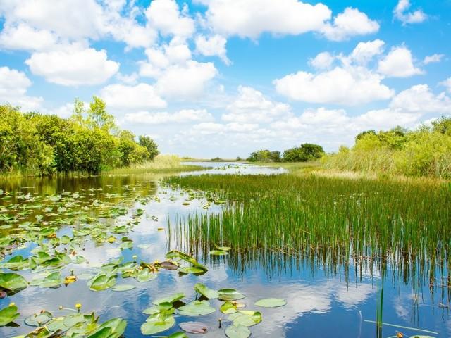 Everglades: Marschland (Foto © Romrodphoto/Shutterstock.com)