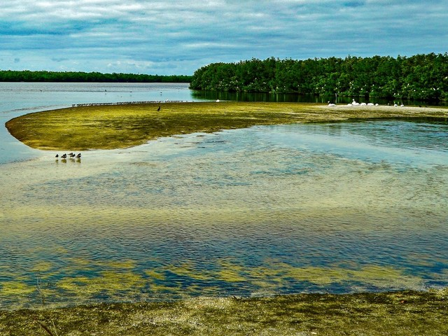 """J. N. """"Ding"""" Darling National Wildlife Refuge auf Sanibel Island (Foto © Susan Rydberg/Shutterstock.com)"""