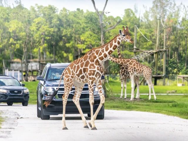 Lion Country Safari in West Palm Beach (Foto