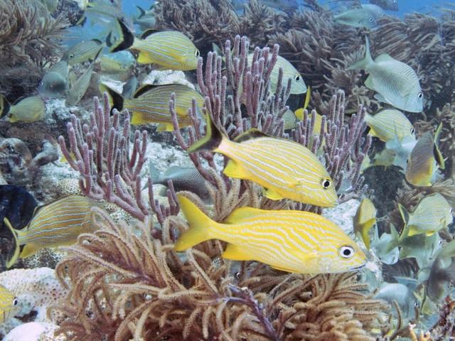 Molasses Reef, Florida Reef, Florida Keys
