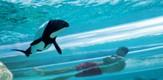 SeaWorld_1016_B1_g.jpe