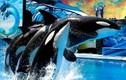 SeaWorld_Orcas_0316_B1_k.jpe