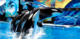 SeaWorld_Orcas_0316_B1_g.png