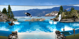 SeaWorld_Orca_0316_B7_g.png
