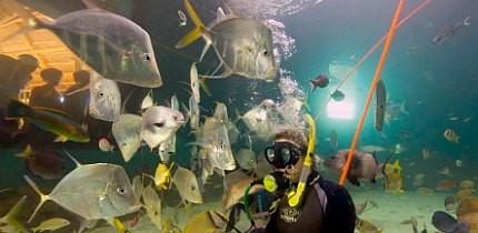 AquariumEncounters_B3_g.jpe