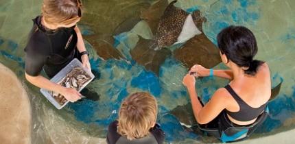 AquariumEncounters_B1_g.jpe