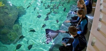 AquariumEncounters_B2_g.jpe
