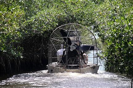 Everglades8.jpe