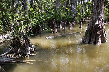 Everglades4.jpe