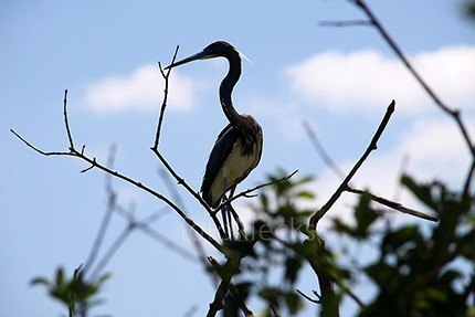 Everglades7.jpe