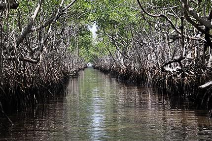 Everglades9.jpe