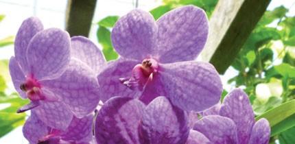 Botanisch_140101_g7.jpe