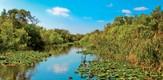 Everglades_120701_g2.jpe