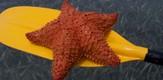 Fischadler_100701_g3.jpe