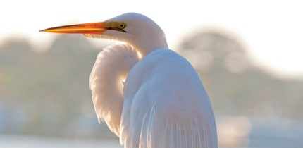 Vogelwelt_100101_g5.jpe
