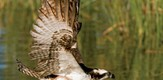 Vogelwelt_100101_g10.jpe