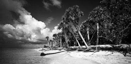Everglades_070401_g1.jpe