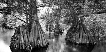 Everglades_070401_g3.jpe