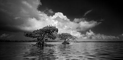 Everglades_070401_g4.jpe