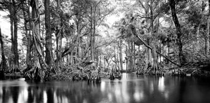 Everglades_070401_g5.jpe