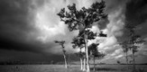 Everglades_070401_g6.jpe